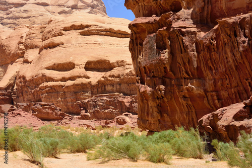 Foto op Canvas Rood paars lush green on desert valley bottom in Wadi Rum, Jordan