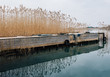 Wooden bridge or dock in lake with marshy grass