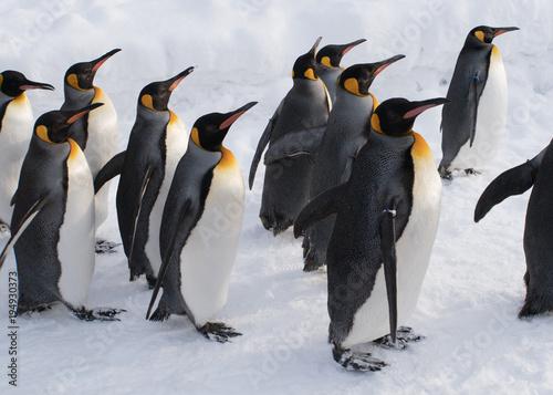 Fotobehang Pinguin 集団ペンギンの行進