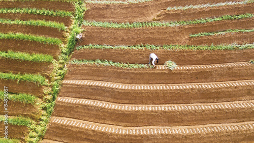 Deurstickers Rijstvelden Farmer working on the red onion terraced field