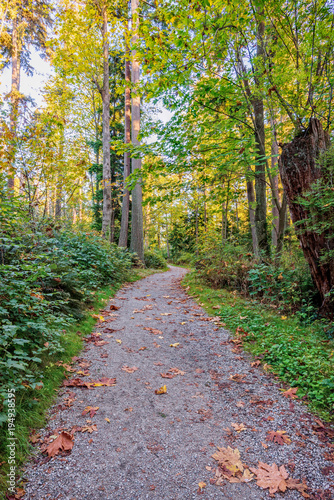 Fotobehang Zalm path in a forest with fallen leaves, going up, between tall trees