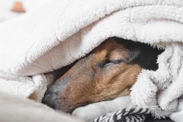 Cute dog sleeping at home