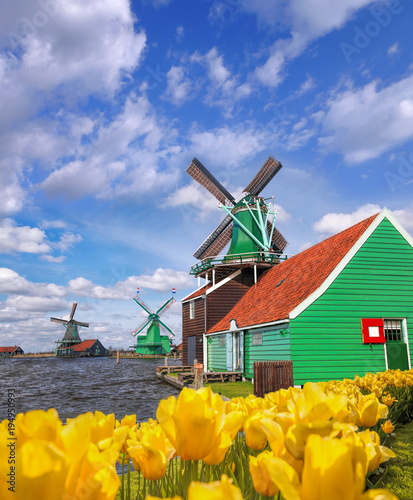 Amsterdam Traditional Dutch windmills with tulips in Zaanse Schans, Amsterdam area, Holland