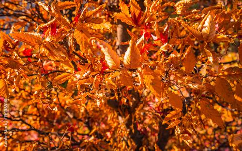 Fotobehang Rood traf. 秋を感じる背景