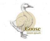 Vector hand drawn goose illustration. Retro engraving style. Sketch farm animal drawing. Duck logo template. - 194966910