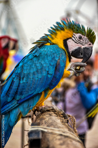 Aluminium Papegaai Blue Bird