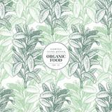 Sage. Vector seamless pattern for design menu, packaging and recipes. Hand drawn vintage illustration. Botanical banner template. - 194971354