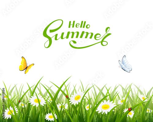 Witam lato i motyle latające nad trawą i kwiatami