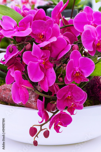 holiday background with beautiful close up purple orchid flowers - 194987184