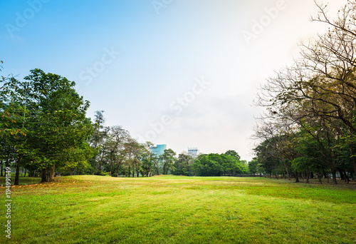 Papiers peints Bangkok Green grass field with tree in Public Park