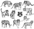 Set of hand drawn sketch style tigers. Vector illustration isolated on white background.