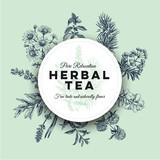 Beautiful vector hand drawn tea herbs Illustration. - 195000390