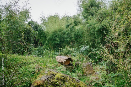 Fotobehang Olijf traditional beehive in Rwanda Africa