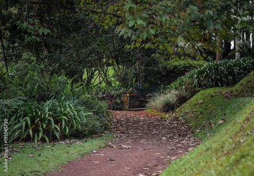 Plexiglas Weg in bos Bosque