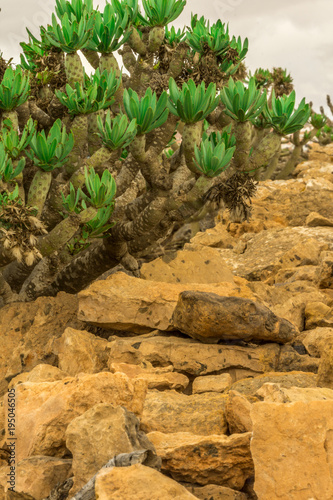Fototapeta Wall of yellow lava rock with green plants