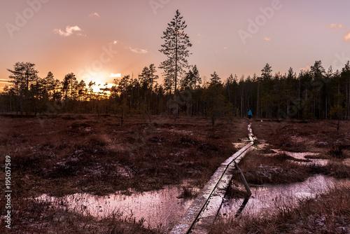 Foto op Canvas Chocoladebruin Swamp