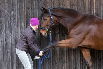 streching horse leg