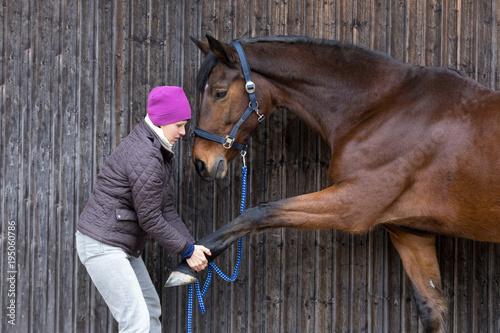 obraz PCV streching horse leg