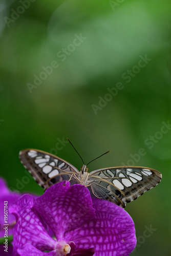 Fotobehang Vlinder tropical butterfly on a red orchid flower