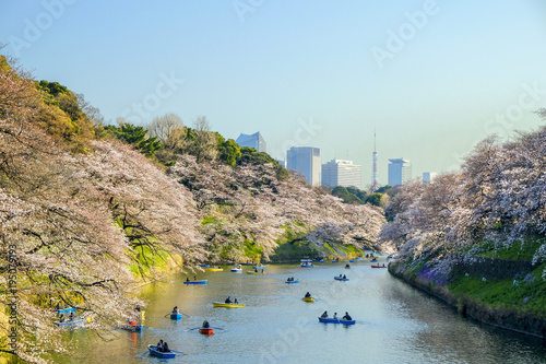 Foto op Canvas Natuur 千鳥ヶ淵の桜と東京タワー