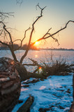 Tree at sunset on a river beach in winter. River Elbe near Hamburg - 195082714
