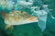 Plastic ocean pollution and fish. Plastic bags dumped in sea contaminate seafood
