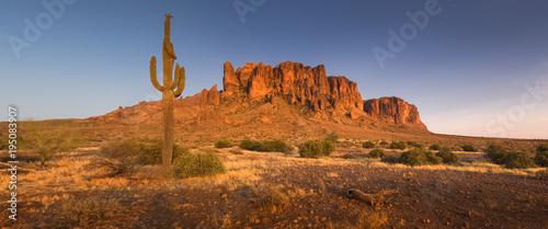 Aluminium Arizona Cactus in the Lost Dutchman State Park, Arizona, USA