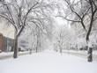 sidewalk with snow trees