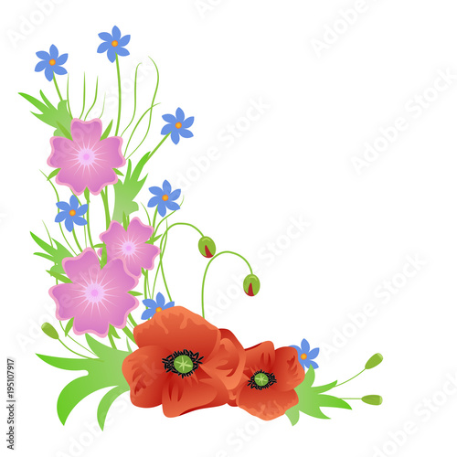 Fototapeta a bouquet of wild flowers red poppies isolated on white background