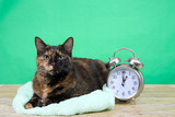 Tortoiseshell tortie tabby cat laying on a fluffy green blanket on wood floor, green background, next to an old fashioned alarm clock set to 1 o'clock AM. Daylight Savings. Spring forward. Fall back.