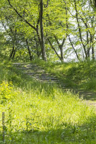 Staande foto Weg in bos 新緑の小径