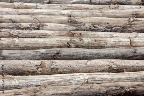 fond bois de choka, troncs d'agave