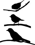 set of three birds on branches black silhouettes