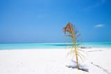 Beautiful Maldives nature - 195115131