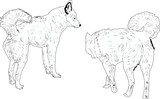 Two Dog Outlines   Wall Sticker