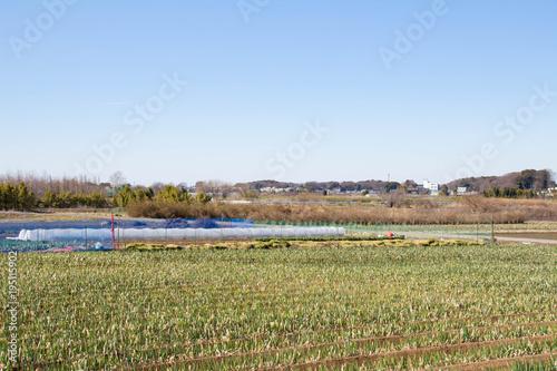 見沼田んぼの風景
