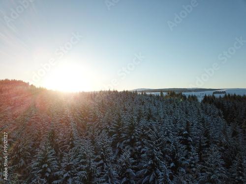 Foto op Canvas Grijze traf. Sunset over the forest