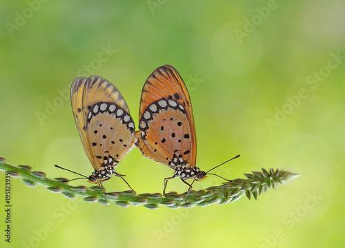 Aluminium Vlinder Lovely Buterfly