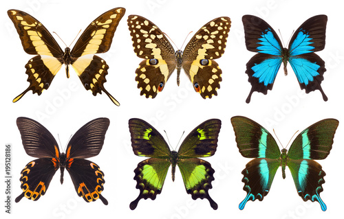 Aluminium Fyle Set of six tropical swallowtail butterflies isolated