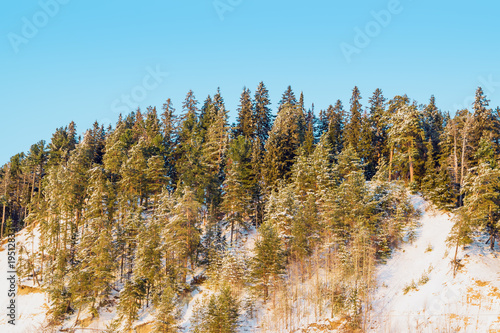 Aluminium Pool Dark coniferous forest on a high hill, spruce and pine trees in sunlight, winter landscape