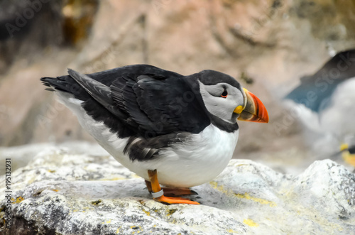 Foto op Aluminium Antarctica Black and White Penguin