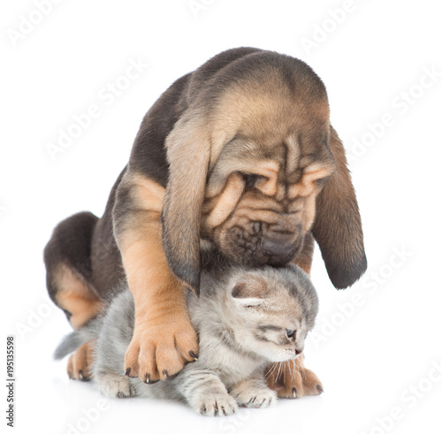 puppy hugs and kisses a kitten. isolated on white background