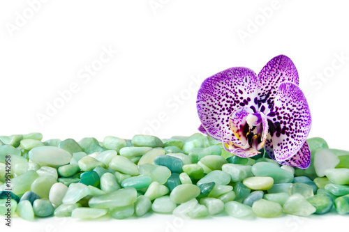 Background - Stones and Orchid