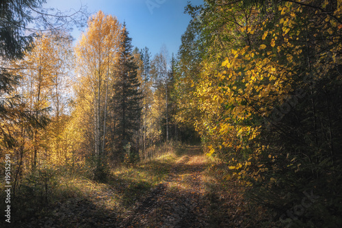 Tuinposter Weg in bos path in sunny autumn forest