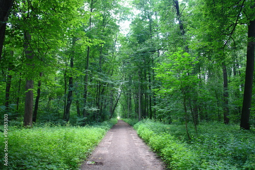 Aluminium Weg in bos Path in the summer green deciduous forest.
