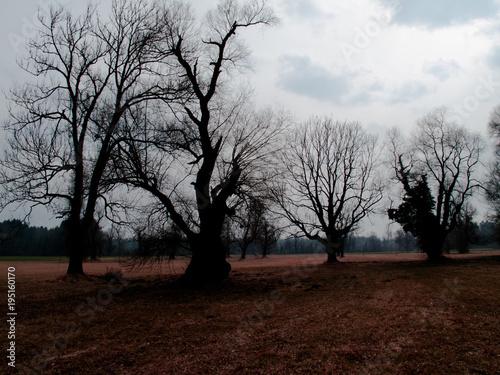 Aluminium Chocoladebruin Solitäre Bäume im März