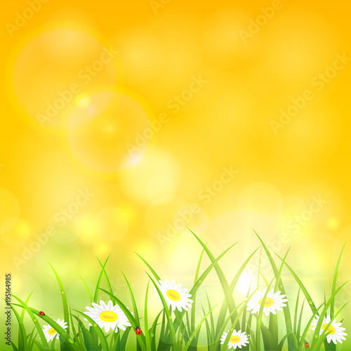 Morning natural background with grass