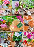 Garten - Gardening