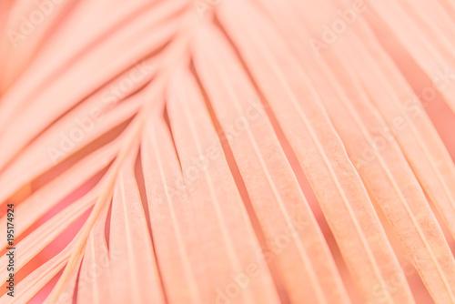 Pink plant - 195174924