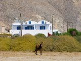 Greece, Santorini island, Perissa village. Cycladic architecture and local transport. House of traditional shape in white and blue colors. Donkey or mule on the field in front of the house. - 195201516